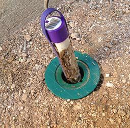 الصيانة غفي النمل الابيض