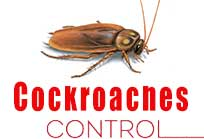 gel treatment Cockroaches
